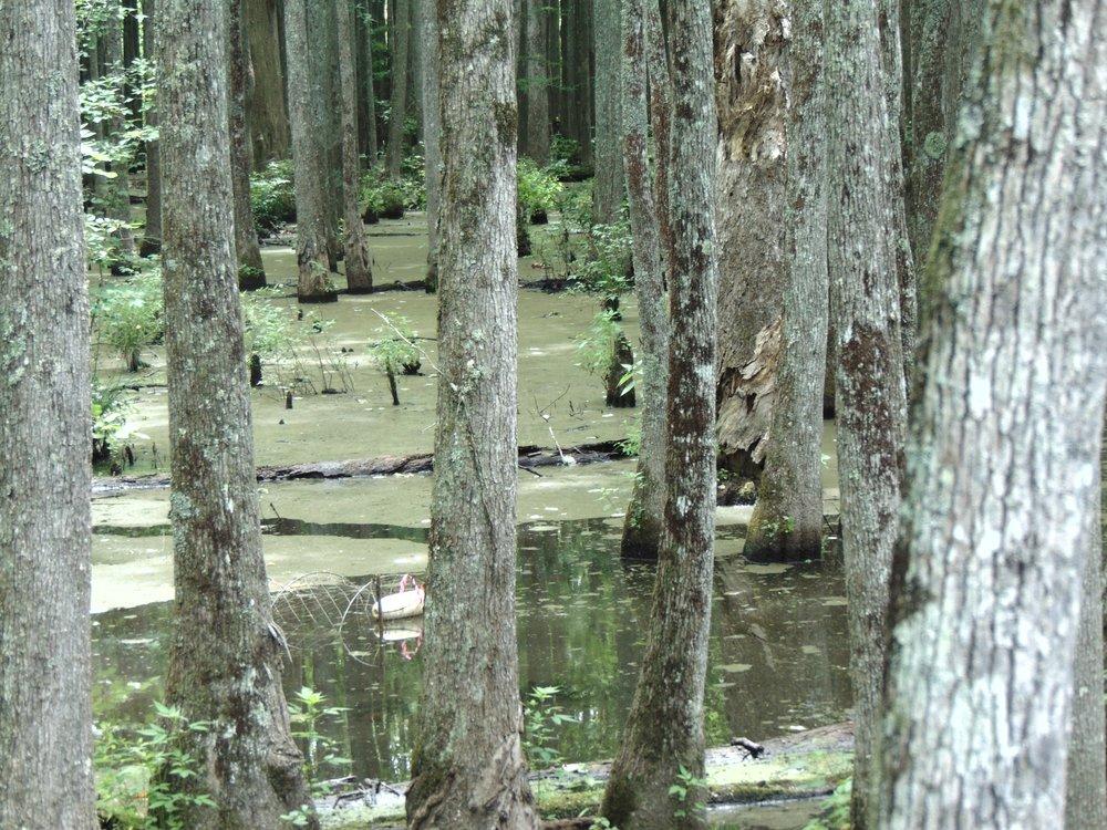 2017 Week 3: Rural wetland assessment