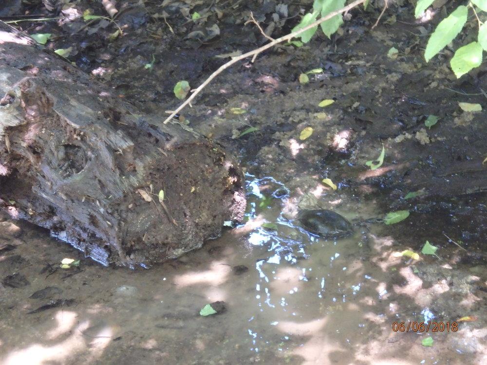 2018 Day 3, Group 1 : Bateman Bridge and Rural Wetland Mineral Slough