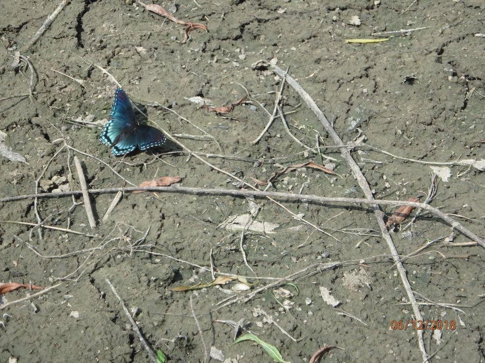 6.12.18 TOF butterfly.JPG