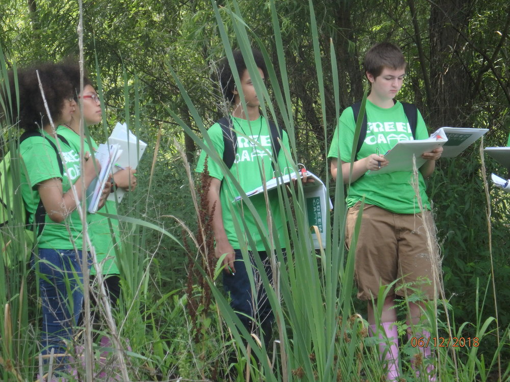 2018 Day 2, Group 2 : Urban Wetland at T.O. Fuller
