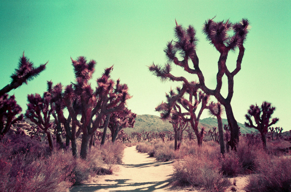 LomoChrome Purple - Cali - 02.jpg