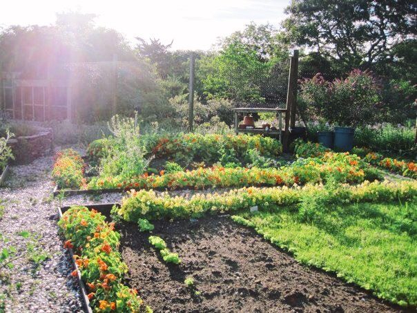 Our vegetable and fruit garden in Nantucket