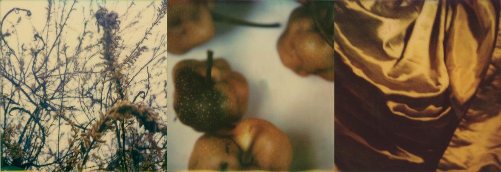 Bitten Fruit (golden)