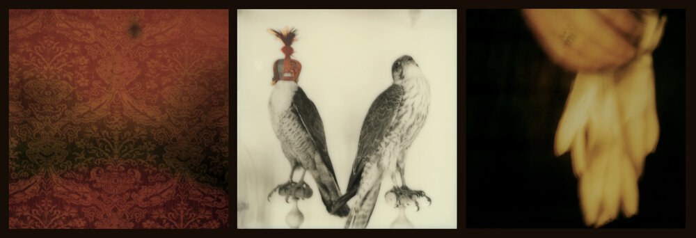 Raptors and Songbirds (red)