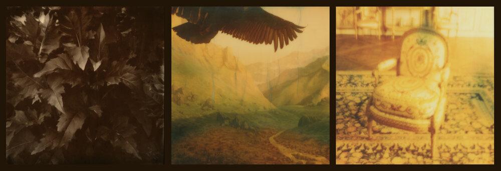 Raptors and Songbirds (gold)