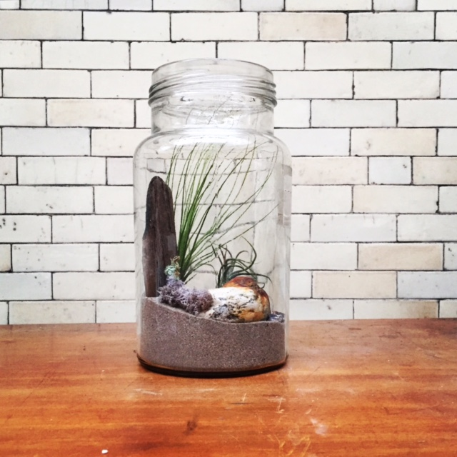 Airplant Sandscape
