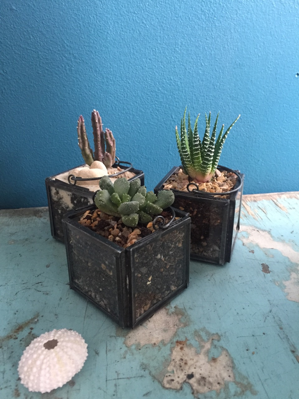 Succulent Miniscapes