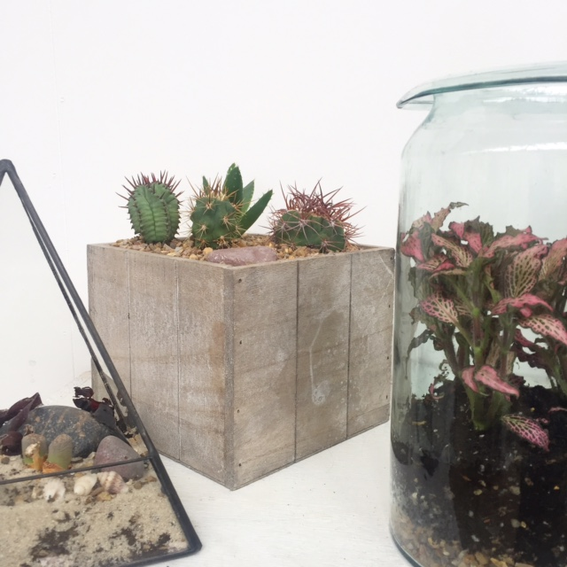 Plant & Cacti Container Variations