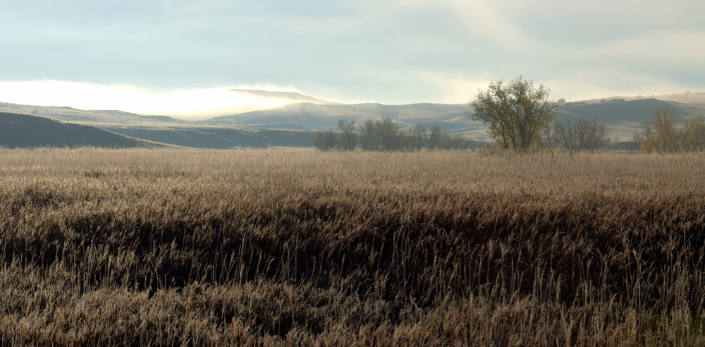 We dipped into a valley and found the world covered in a lace-like frost. It was beautiful. We saw a coyote as well. Maybe it was one them we had listened to earlier that morning, while watching the buffalo.
