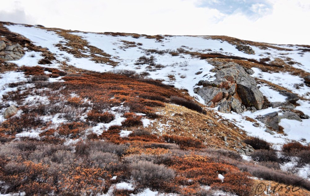 The tundra was still colorful in the snowless patches. A reminder that it is indeed autumn.