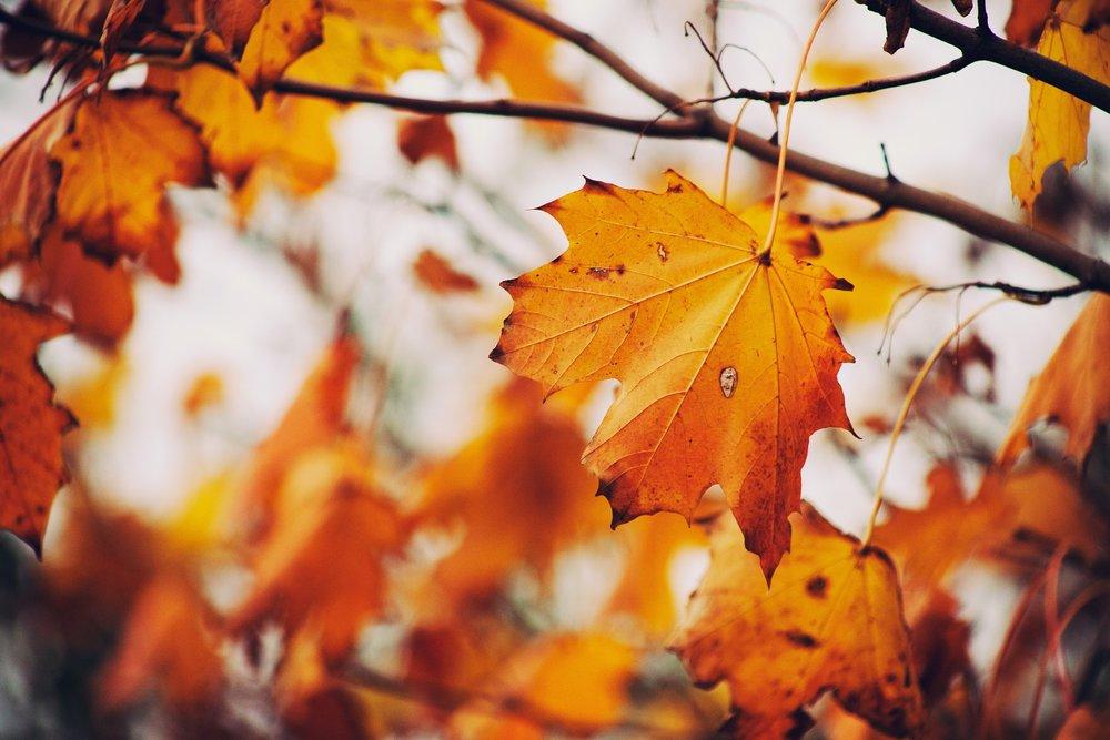 autumn-843213_1920.jpg