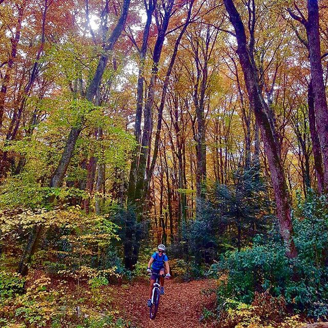 'I'm so glad I live in a world where there are Octobers.' —L.M. Montgomery (Thanks @wild.happy.heart for the quote. I feel the same way! ❤️🍁)