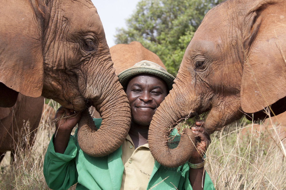Edwin cares for abandoned orphans from the ivory trade at the David sheldrick wildlife trust.  © 2018  photo:by  Lisa Hoffner wildeye photo.com