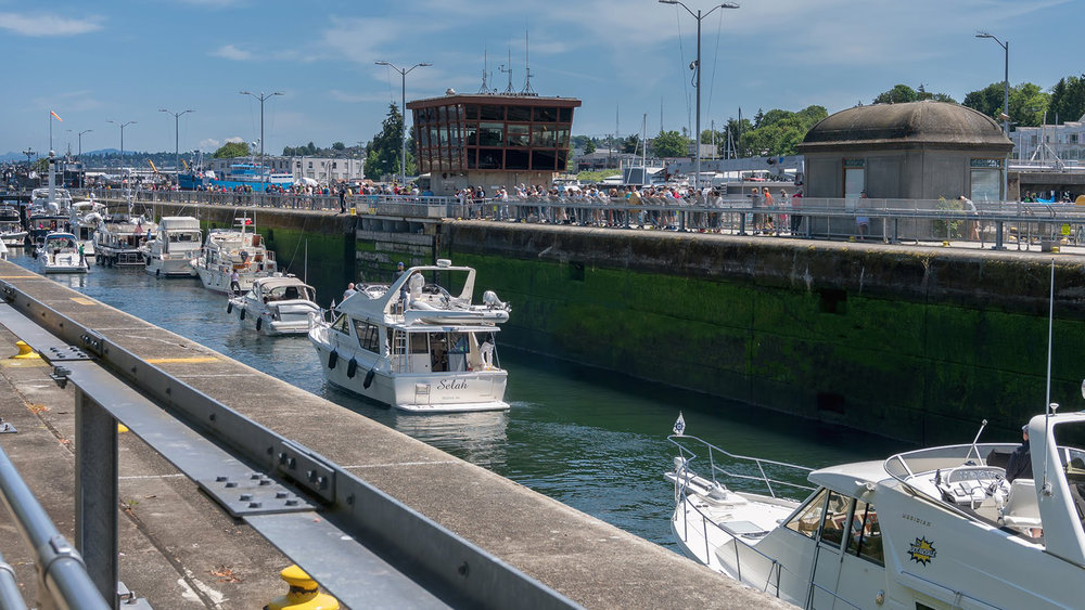 Image 2 / Boats are carried through the Ballard Locks while salmon climb the adjacent fish ladder to the freshwater of Salmon Bay. Image by Gummi Ibsen.