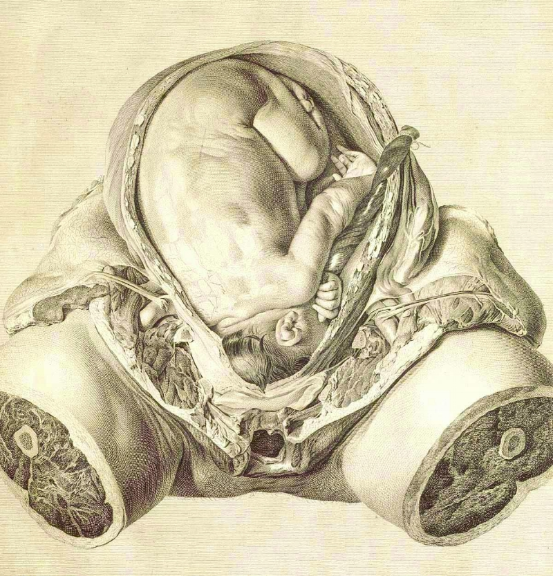 Image 12 / Jan van Riemsdyk, The Anatomy of the Human Gravid Uterus, 1764. Copperplate engraving. National Library of Medicine