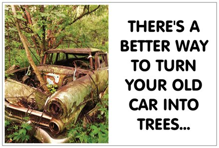 old_car_trees.jpg