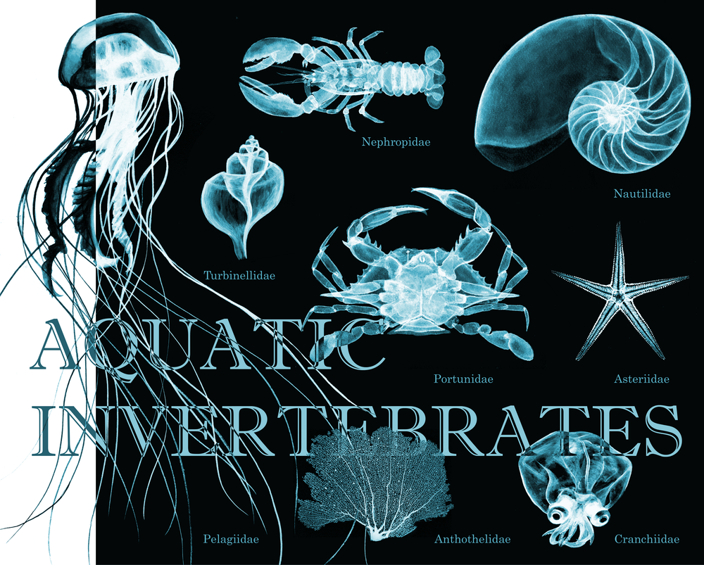 invertebrates1-01.png
