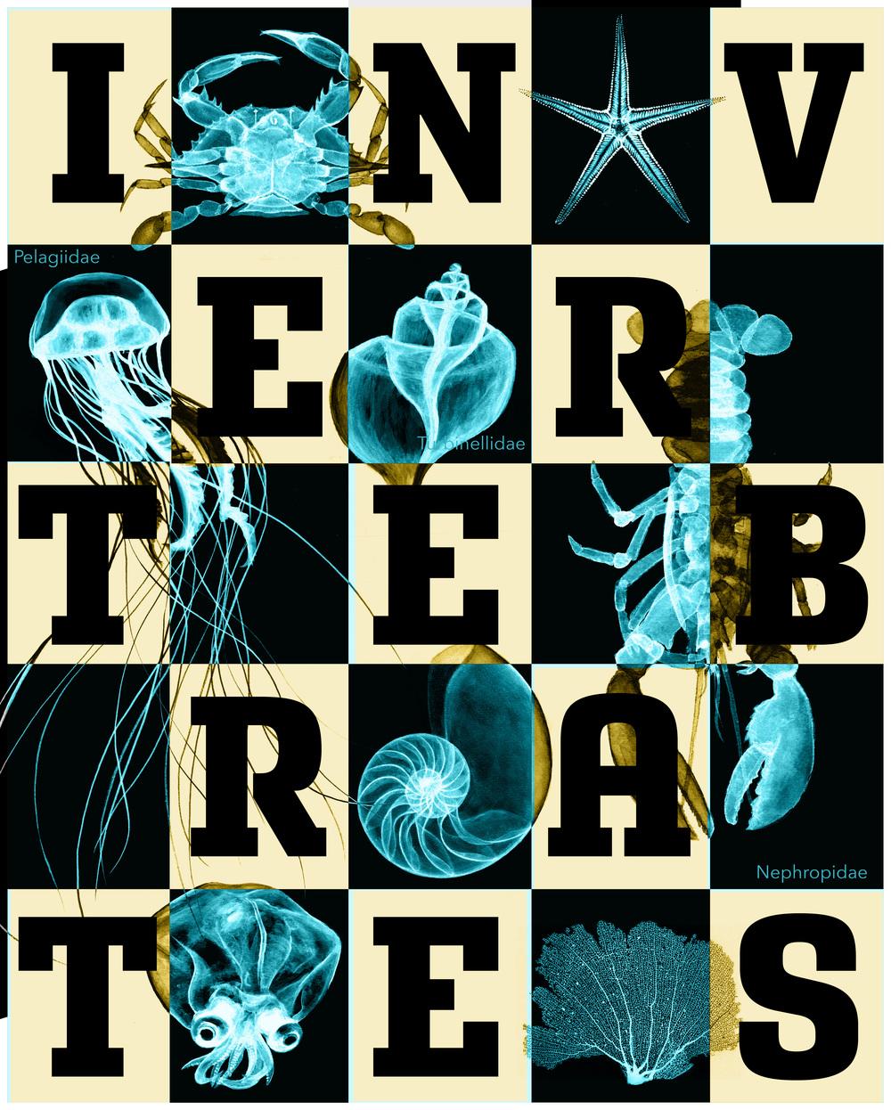 invertebrates5-01.jpg
