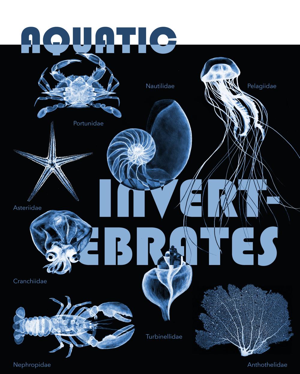 invertebrates3-01.png