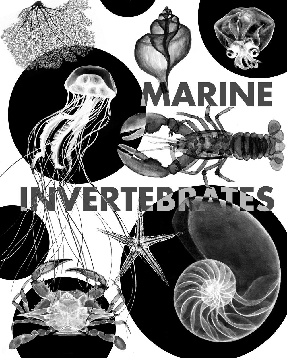 invertebrates4-01.png
