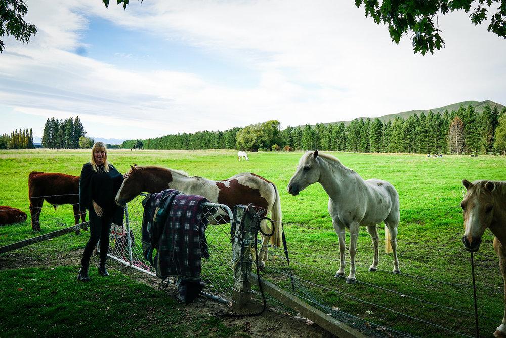 SUZANN_HORSES2.jpg