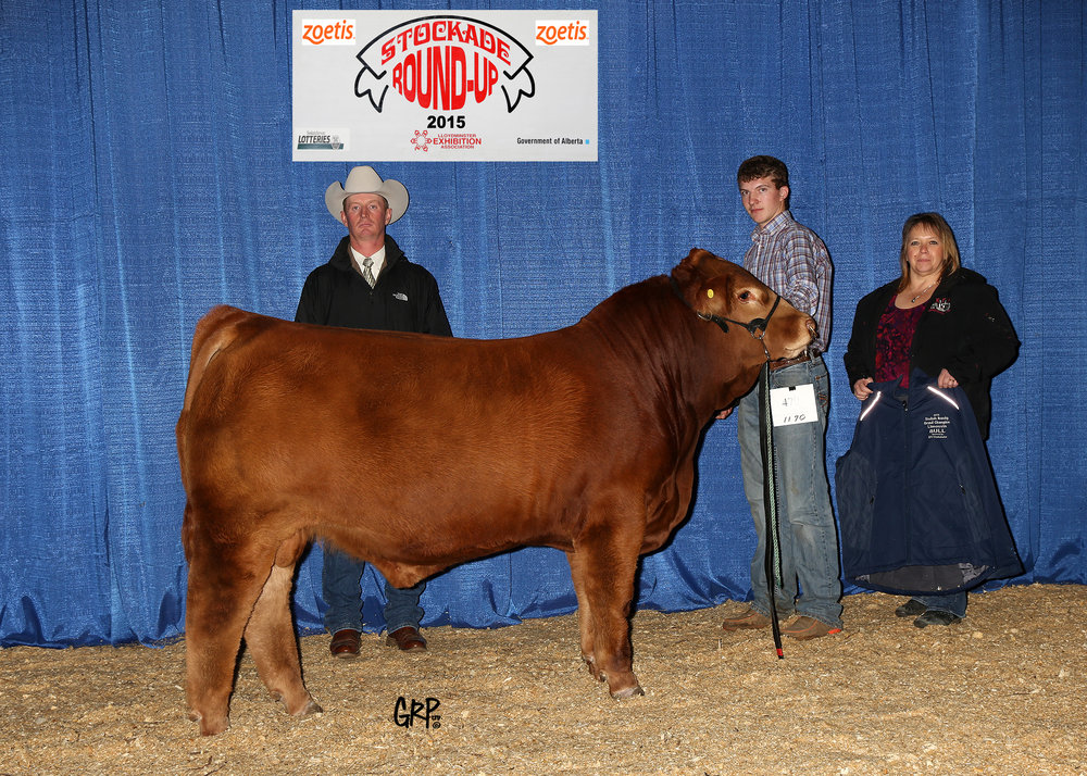2015 Grand Champion Limousin Bull exhibited by  GREENWOOD LIMOUSIN AND ANGUS