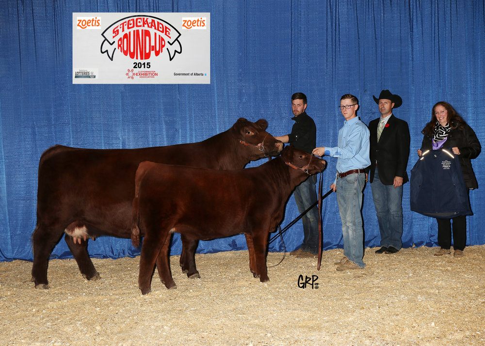 2015 Grand Champion Shorthorn Female exhibited by  DIXON FARMS