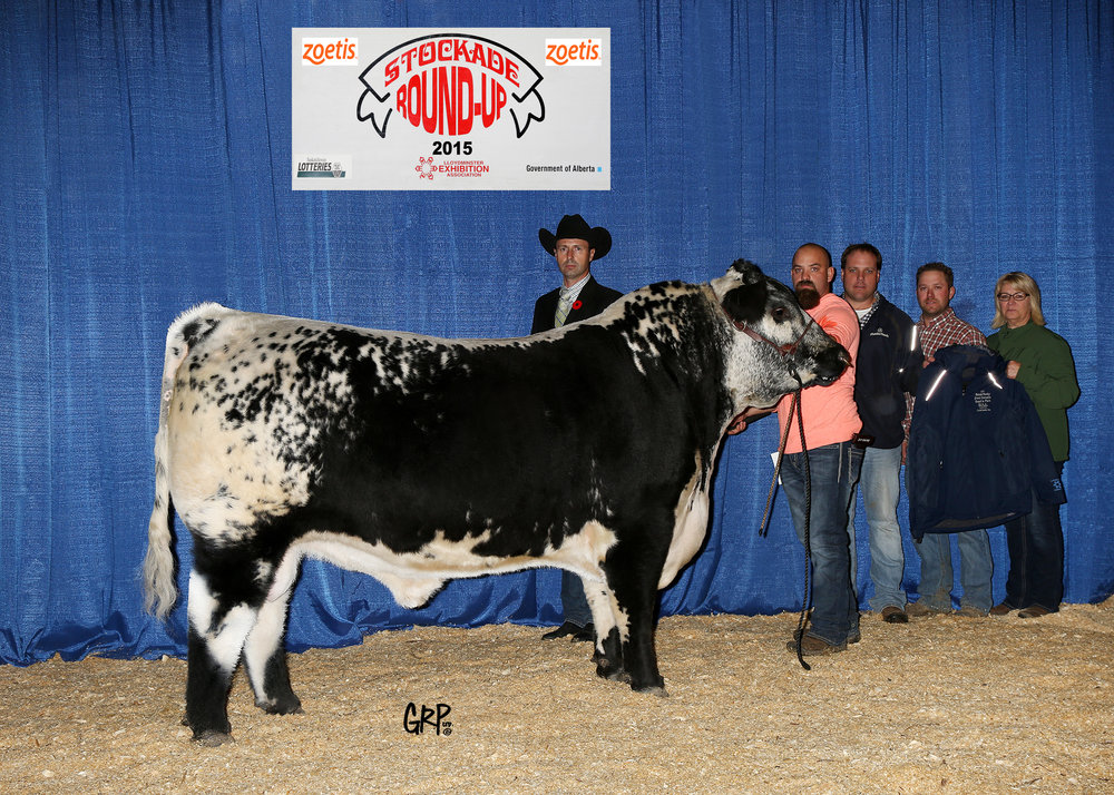 2015 Grand Champion Speckle Park Bull exhibited by JOHNER STOCK FARM & H & S LAND & CATTLE