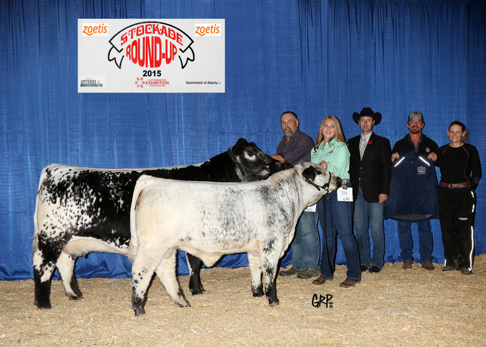 2015 Grand Champion Speckle Park Female exhibited by  GARRY & DONNA BERTING / RAVENWORTH CATTLE