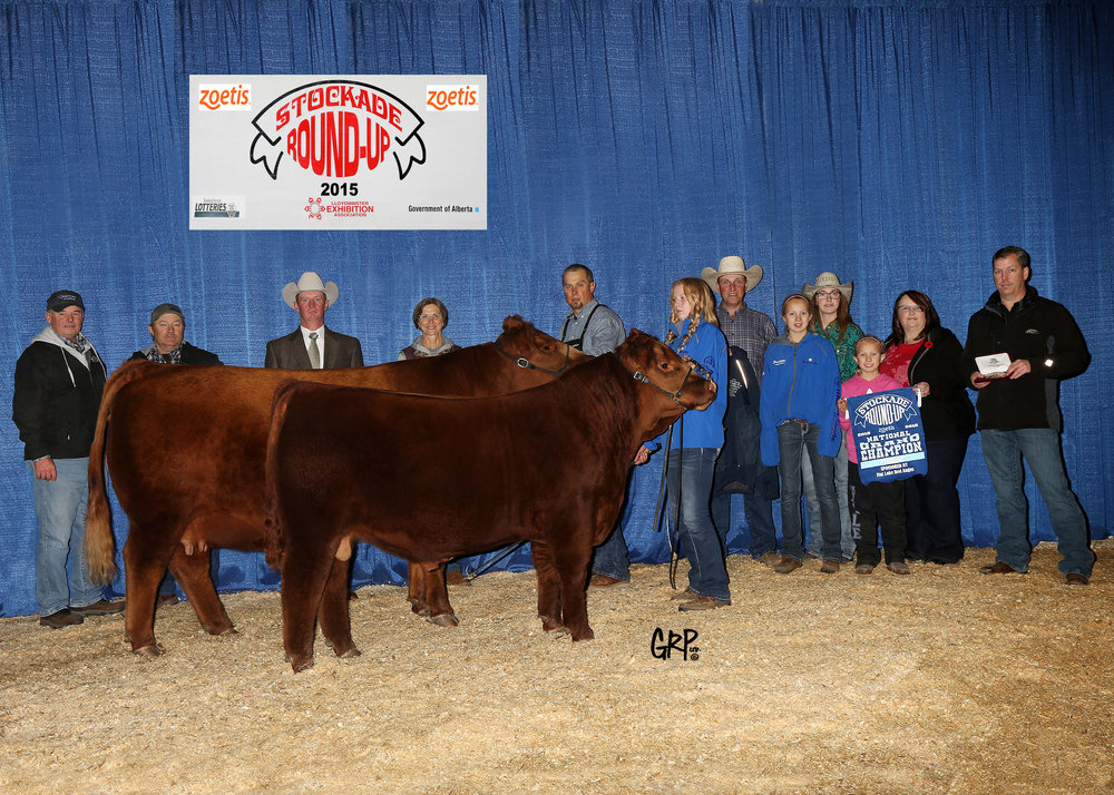 2015 Grand Champion Red Angus Female exhibited by  TER-RON FARMS
