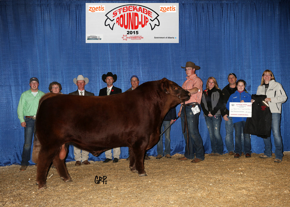 2015 Supreme Champion Bull - Red Angus - Exhibited by  REDRICH FARMS & WOOD COULEE RANCH