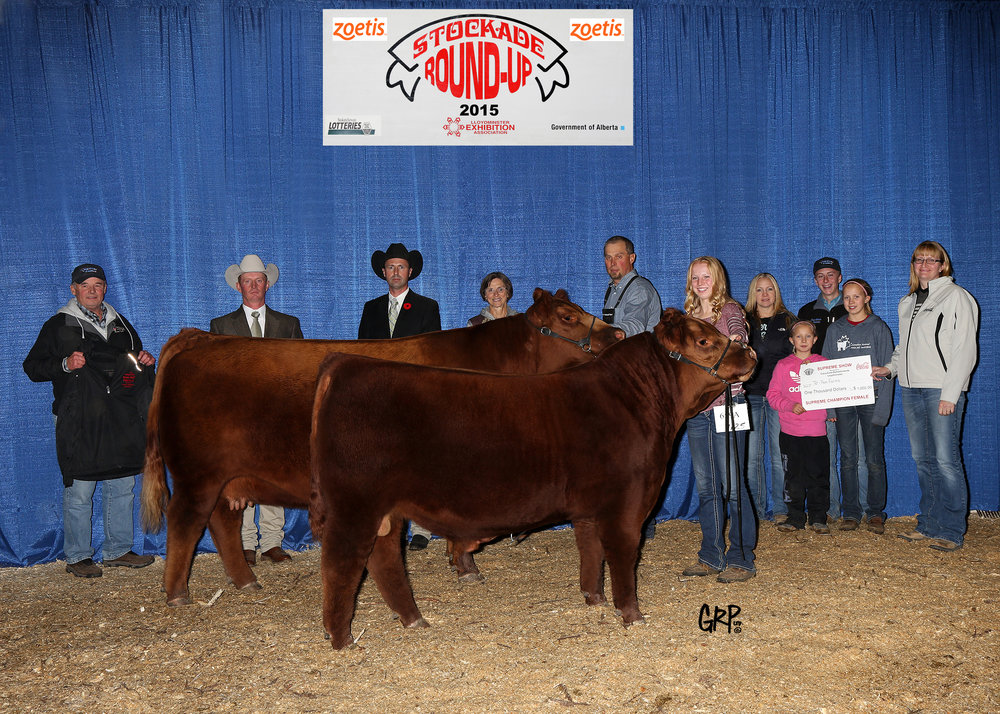 2015 Supreme Champion Female - Red Angus - Exhibited by  TER-RON FARMS