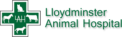 lloyd animal hospital.png