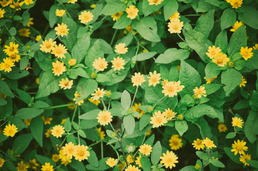 san   diego wedding photographer | yellow flowers and green plants