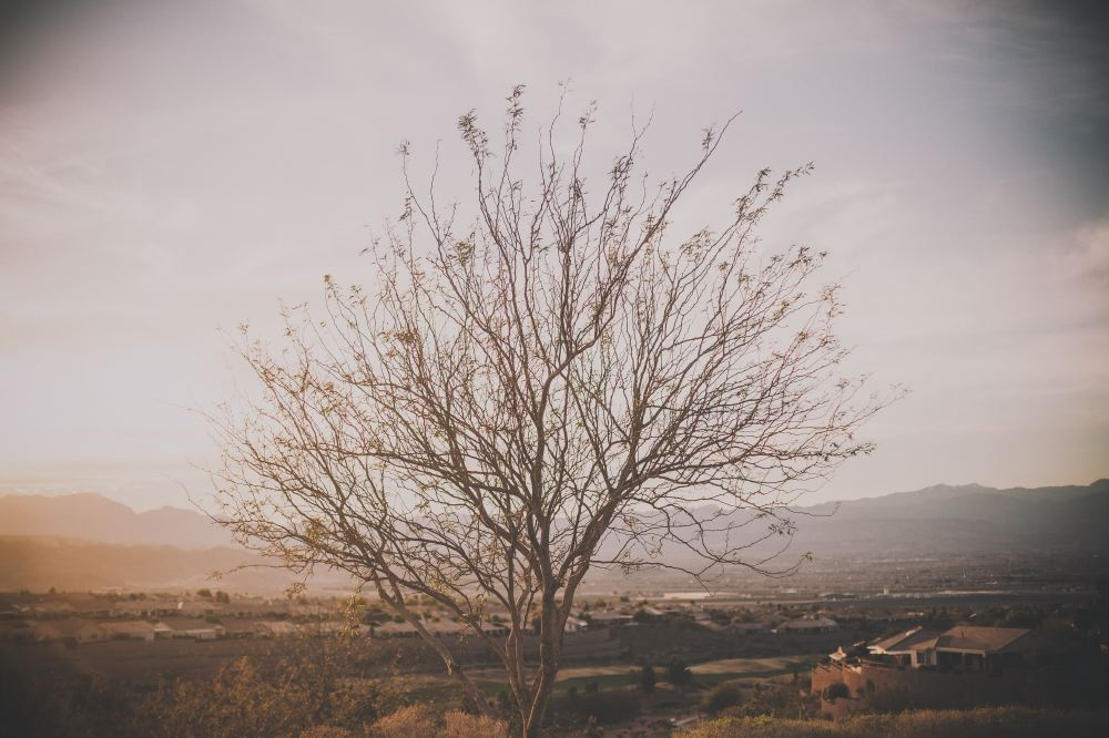 san   diego wedding photographer | shot of big tree with few leaves in countryside
