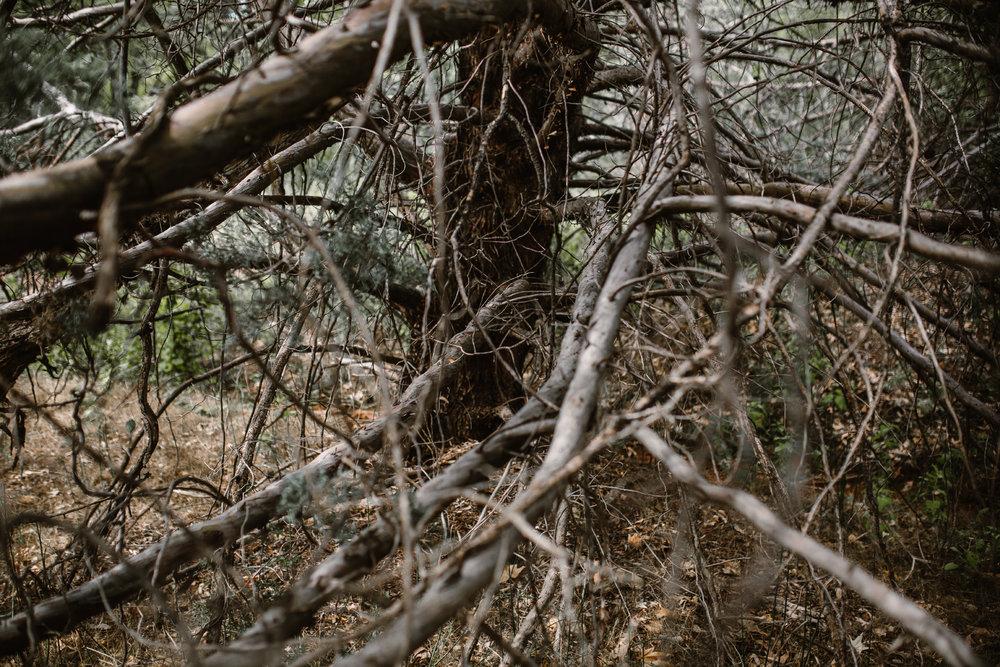 san diego wedding   photographer | dead tree branches