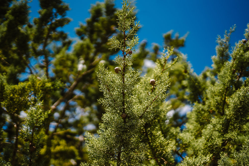 san diego wedding   photographer | picture of branch with thorny leaves