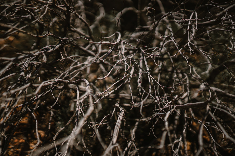 san diego wedding   photographer | collection of dead branches on ground