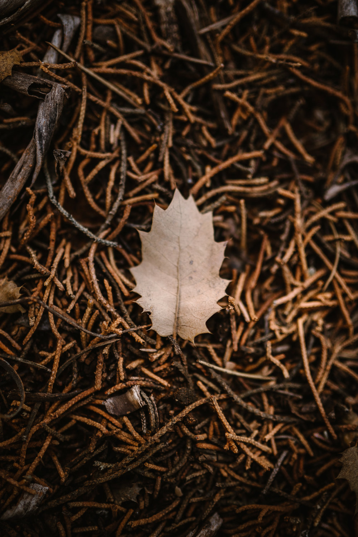 san diego wedding   photographer | dead leaf on pile of twigs