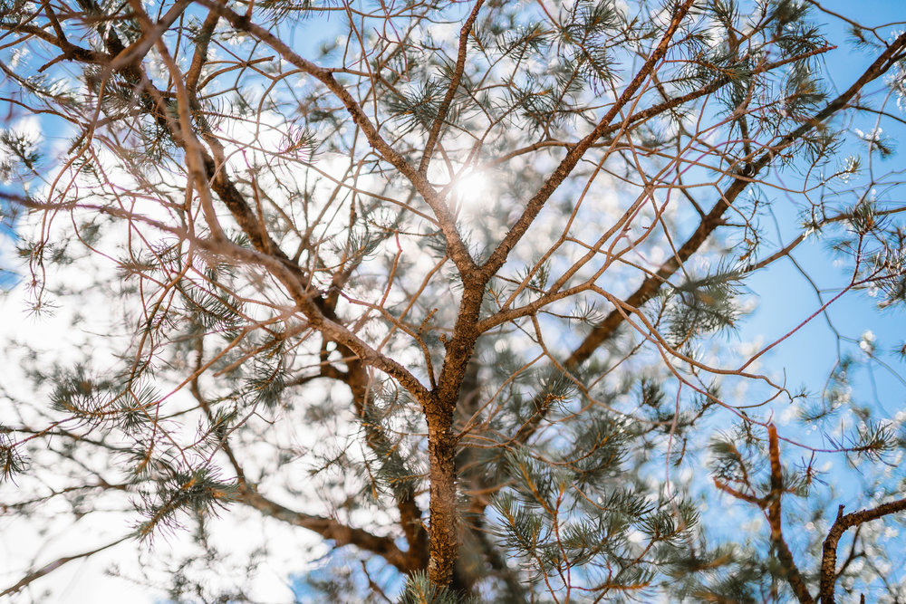 san diego wedding   photographer | sunlight shining through dead tree branches