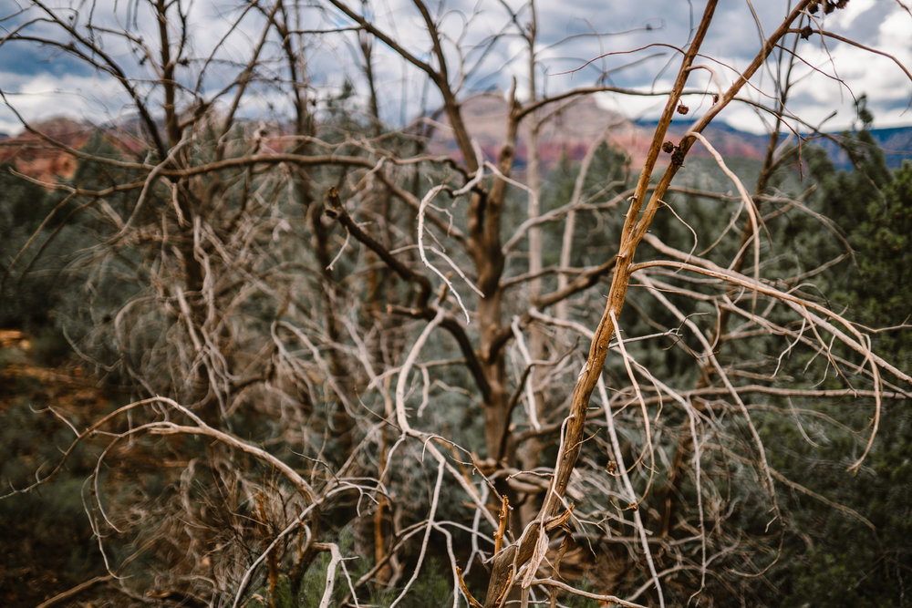 san diego wedding   photographer | dead branches with canyon and cloudy sky in background
