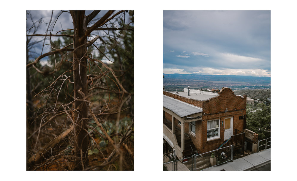 san diego wedding   photographer | collage of dead tree branches and old brown building