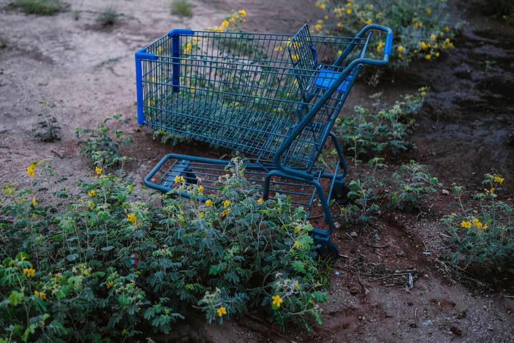 san diego wedding   photographer | blue shopping cart amongst flowering plants