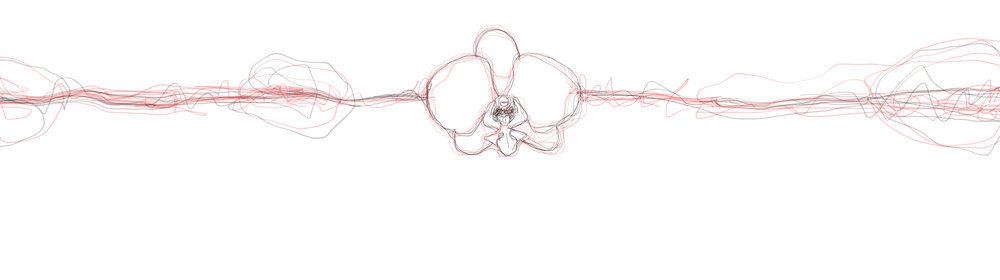Orchid_Phalaenopsis_hybrid.jpg