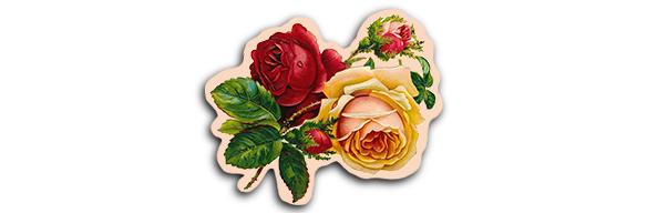 flores. dibujadas....-1.jpg