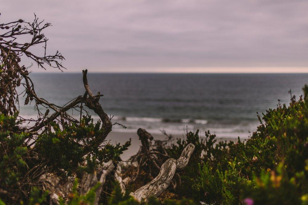 san diego wedding   photographer | view of beach seen through growth of plants