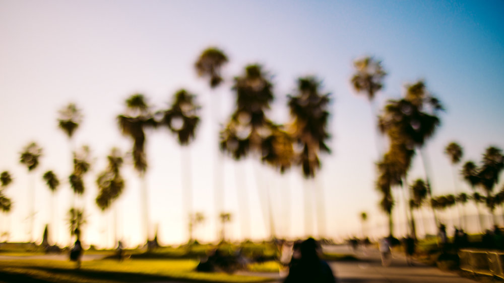 san diego wedding   photographer | out of focus shot of palm trees