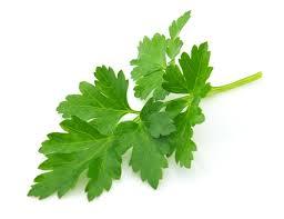 flat leaf parsley.jpg