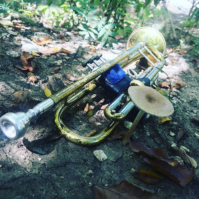 Serenading this mushroom today. Don't judge. #nmjazztet #jazz #trumpet