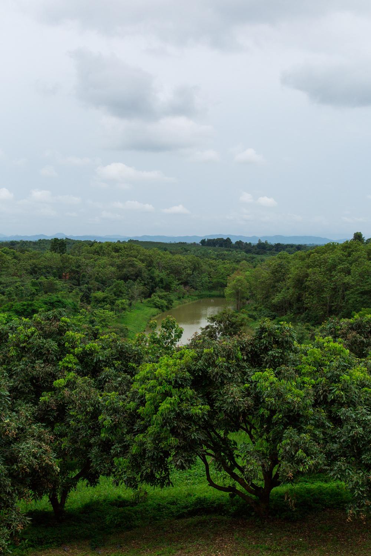 ChiangRai-Bog-2.jpg